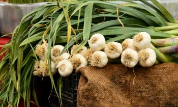105 farmers in the county have registered in the programme for supporting the garlic production
